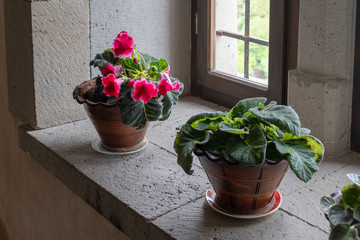 Houseplant with red flowers on the windowsill of a medieval castle.