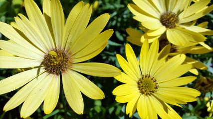 photo of flowering plants