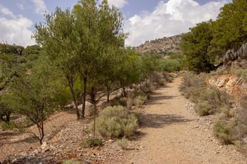 Feldweg auf Kreta