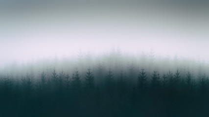 nature background with moody forest