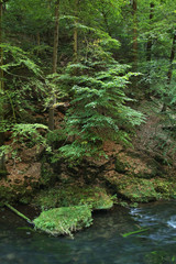 Kamenice river near Hrensko. Bohemia. Czech Republic