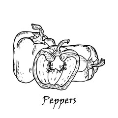 Hand drawn illustration of three  peppers