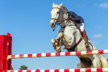 Show Jumping Horse Rider Closeup Action