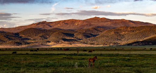 Hunewill Guest & Cattle Ranch near Bridgeport, California at the foot of the Eastern Sierra Nevadas