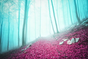 Wall Mural - Fantasy colored autumn season foggy forest scene with path.