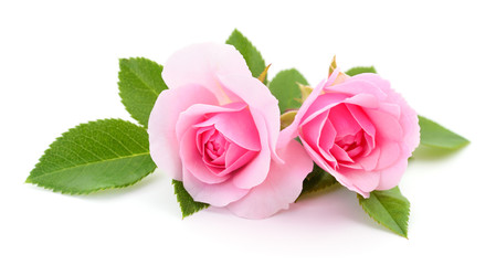 Beautiful pink roses.
