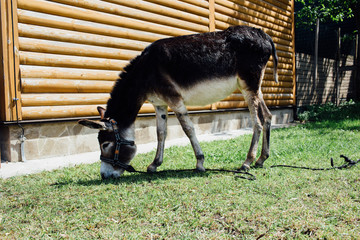 donkey eating grass, near the house, Spain.