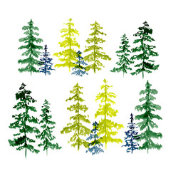 Set of conifer trees drawing by watercolor, illustration.