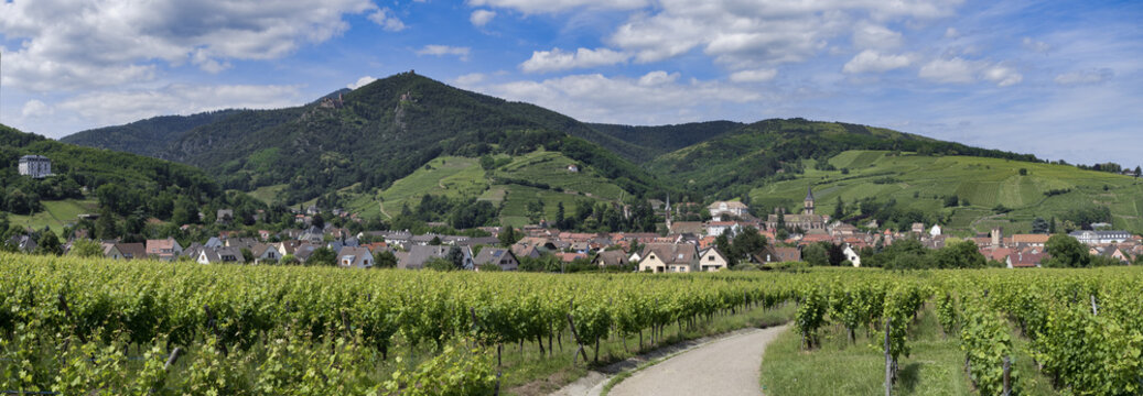 Ribeauville Elsass Panorama Frankreich