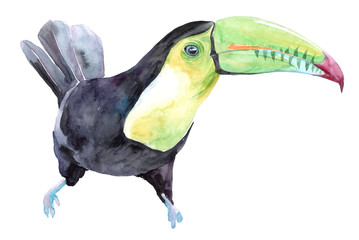 Isolated watercolor clipart with tropical toucan bird.