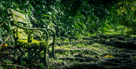 Old bench camouflage in the overgrown tropical forest