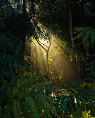 Sunbeam through the forest