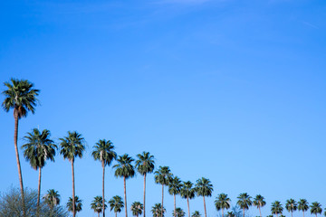 Line of palm trees against blue sky with copy space