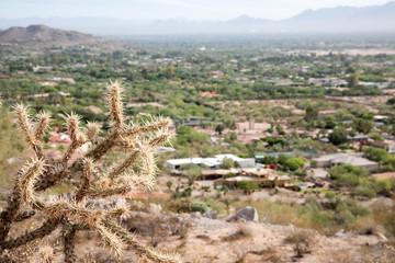 Cholla cactus over Scottsdale, Arizona
