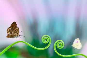 Butterflies on green soft grass, beautiful artistic image, background, blank for postcard, macro, selective focus