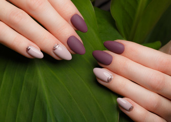 Foto op Plexiglas Manicure Tender neat manicure on female hands on a background of green leaves. Nail design