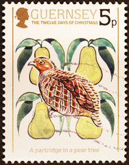 Twelve days of Christmas - a partrifge on a pear tree on postage stamp of Guernsey