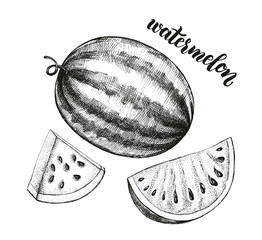 Ink hand drawn Whole Watermelon and Slice. Vector illustration with brush calligraphy style lettering. Elements for design labels, packaging, cards.