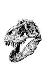 Graphical skull isolated on white  background,vector tyrannosaurus  for tattoo and printing