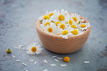 camomile or chamomile flowers