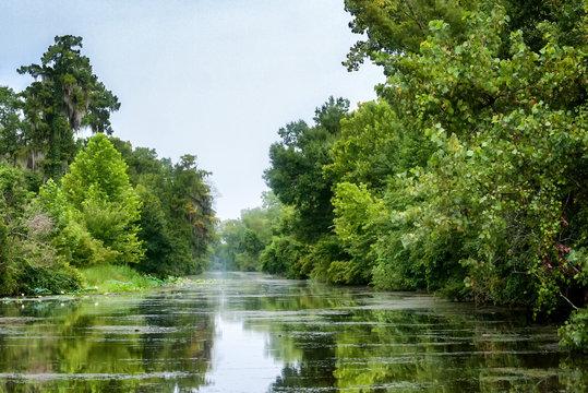 Scene at a swamp river in Louisiana's bayou