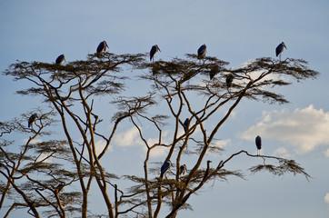 Serengeti, Tansania