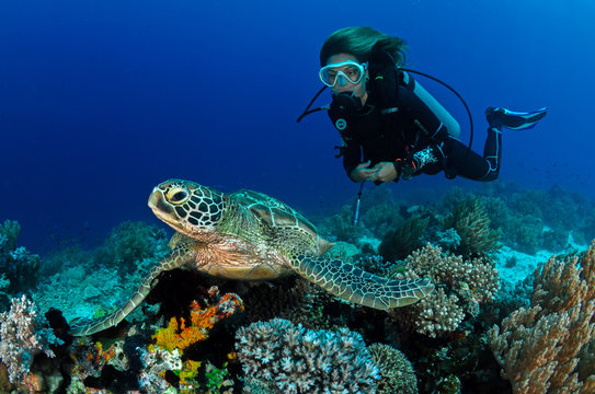 Turtle and girl
