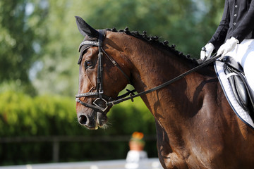Unknown contestant rides at dressage horse event indoor in riding ground