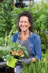 Freundlich lächelnde Gärtnerin im Laden mit einer Tomatenpflanze im Topf