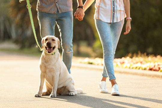 Owners walking their yellow labrador retriever outdoors