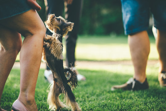 small dog is jumping on people