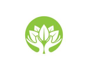 Green Tree leaf ecology nature element