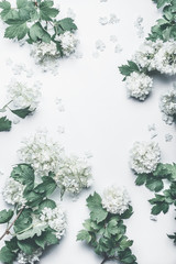 Wall Mural - Beautiful floral frame layout with flowers on white background, top view