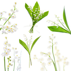 Lily of the valley, bunch of flowers on white background, picture set