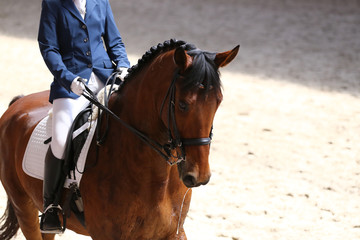Portrait close up of dressage sport horse with unknown rider
