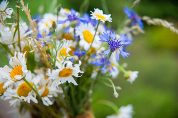 Midsummer in Latvia: celebration of Ligo in june decorating home with field flower bouquet