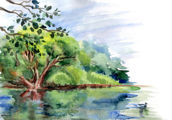 Duck pond and trees on the shore, watercolor painting.