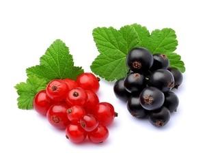 Sweet berries of currants.