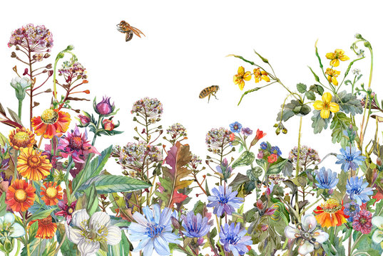 Seamless rim. Border with Herbs and wild flowers, leaves. Botanical  Colorful illustration on white background. Summer composition with bees. Watercolor drawing.