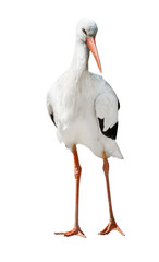 isolated single stork standing on two legs