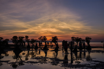 People enjoying evening, Mangrove in Walakiri Beach, after sunset, East Sumba, Indonesia