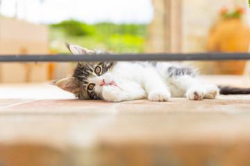 gattino si lecca i baffi