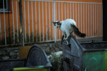 A cat searches for food from a garbage bin in central Skopje