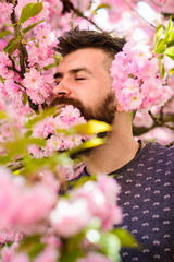 Man with beard and mustache on calm face near pink flowers. Unity with nature concept. Bearded man with fresh haircut with bloom of sakura on background. Hipster with sakura blossom in beard.