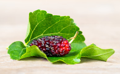Close up of mulberry with a green leaves on the white background (Isolated background). This a fruit and can be eaten in have a red and purple color and delicious and sweet nature.