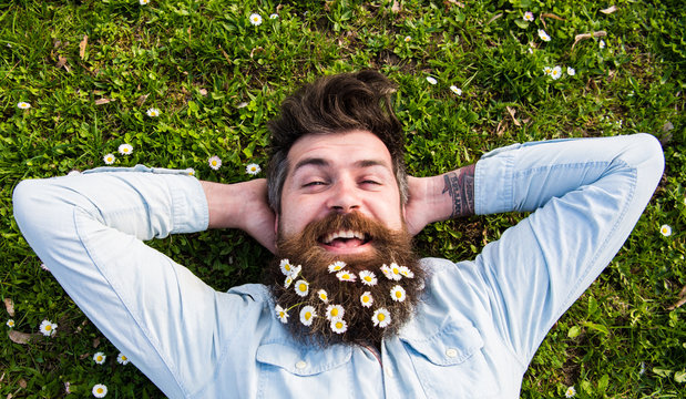 Spring holiday concept. Hipster on happy face lays on grass, top view. Man with beard and mustache enjoys spring, green meadow background. Guy looks nicely with daisy or chamomile flowers in beard.