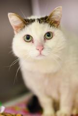 White rescue cat
