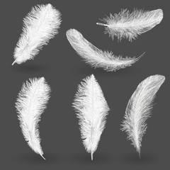 twirled realistic feathers isolated on a transparent background. Easy style, can be used in flyers, banners, a web. Elements for design.