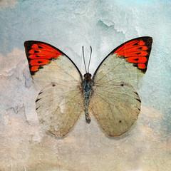 Tuinposter Vlinders in Grunge a grunge butterfly wallpaper texture