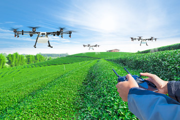 Hand control agriculture drone fly to sprayed fertilizer on the green tea fields, Smart farm 4.0 concept